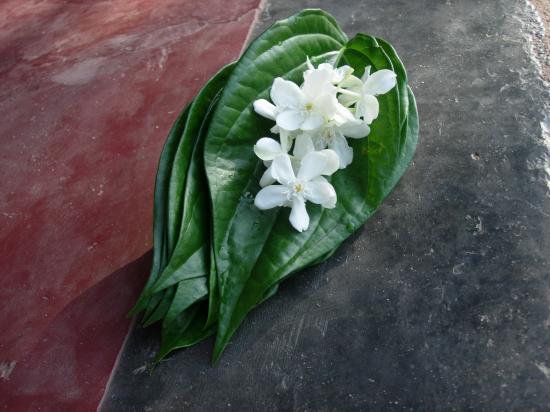 Offrande - Sri Lanka