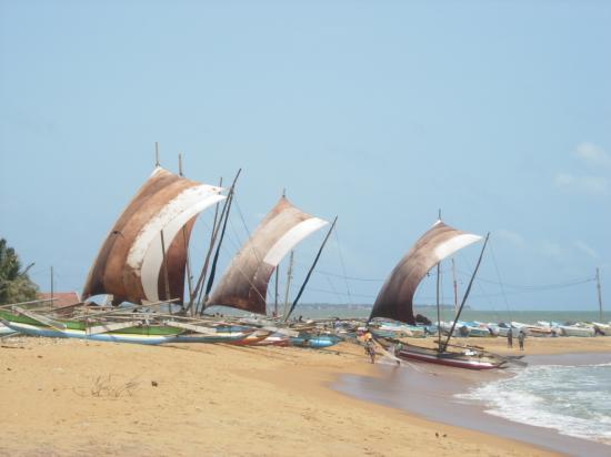 Bateaux de pêche - Sri Lanka